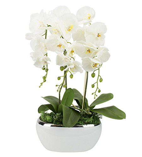 First Kunstpflanze Orchideen Höhe: ca.65cm in Weiß | Bluten aus Stoff | im Keramik Übertopf | Orchidee Gesteck Blumengesteck Dekoration Kunsblumen Fensterschmuck Schmuck