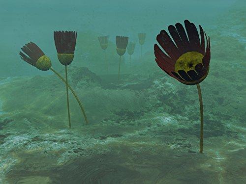 Walter Myers/Stocktrek Images - Species of The Genus Dinomischus populate The Ocean Floor 505 Million Years ago. Photo Print (83,31 x 62,48 cm)