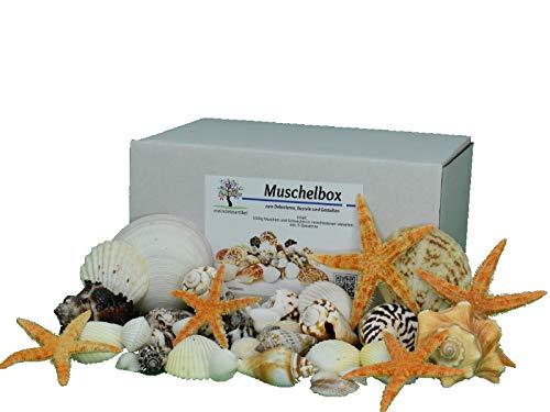 meindekoartikel DEKOMUSCHEL Box - 1000g Bunter-Mix mit Seesternen Maritime Dekoration Muscheln Schnecken Aquarium Basteln und Dekorieren