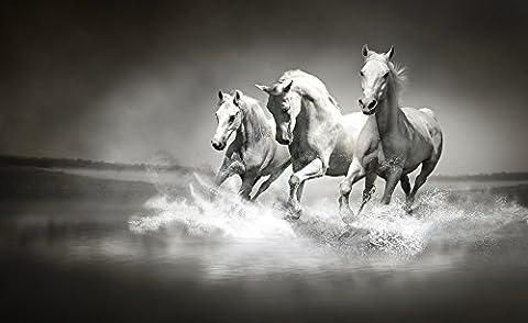 Galloping Horses Black and White Wallpaper Mural