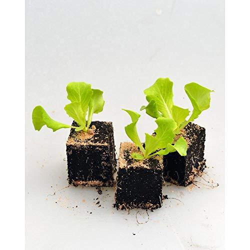jungepflanzen Z:3850
