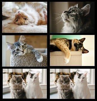 Lot de 6 sets de table Chat - Noir et Blanc, tigré, Calico, gris, Fluffy Cats.