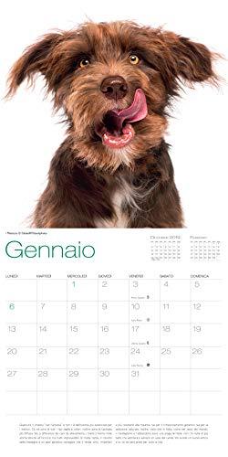 Zoom IMG-1 cani calendario 2020 da muro