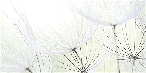 Artland Qualitätsbilder I Bild auf Leinwand Leinwandbilder Wandbilder 60 x 30 cm Blumen Pusteblume Foto Grün C7LR Pusteblumen-Samen aufgehellt