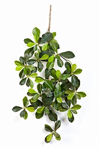 artplants Set 3 x Künstliche Bucida Buceras Zweige Javier, 115 Blätter, grün, 55 cm – Kunst Zweige/Deko Pflanzen