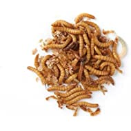 Live Regular Mealworms Bulk Bag - 500g
