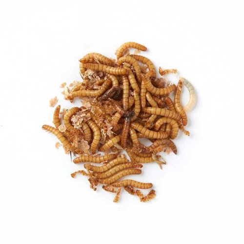 Live Regular Mealworms Bulk Bag – 500g