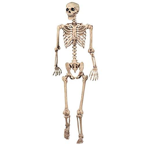 Halloween Decoration Skeleton Poseable Decoration Life Size 165cm Party Prop Graveyard Bones