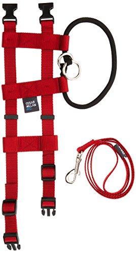 Original Illusion Collar Trainingshalsband & Leine des amerikanischen Hundeflüsterer Cesar Millan, Größe Small, Rot