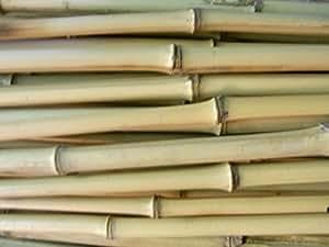 10 x Bambusrohr Bambusstange Bambushalm Bambus Bambusrohre 10 x 1-2 x 2 m / 10 - 20 mm