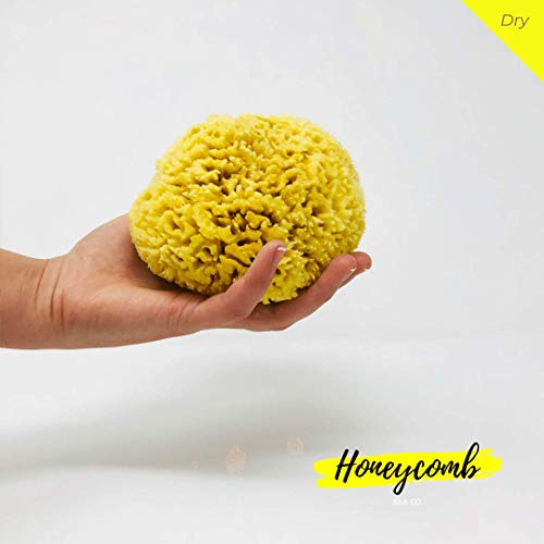 Honeycomb - Esponjas de mar naturales orgánicas