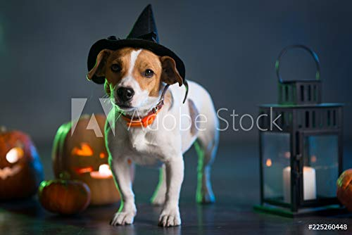 druck-shop24 Wunschmotiv: Dogl in Costume for Halloween #225260448 - Bild als Foto-Poster - 3:2-60 x 40 cm / 40 x 60 cm (Stock-fotos Costume Halloween)