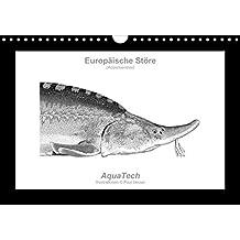 Europäische Störe (Acipenseridae): Fisch als Kunst (Wandkalender immerwährend DIN A4 quer): Fisch als Kunst - Immerwährender Kalender mit 13 ... Tiere) [Kalender] [Sep 17, 2013] Vecsei, Paul