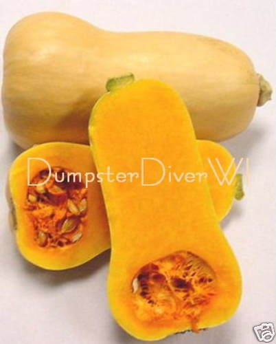 Courge musquée bio 25 + Waltham Sweet Seeds Buttery non-OGM long stockage