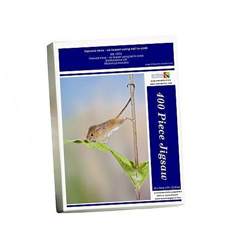 photo-jigsaw-puzzle-of-harvest-mice-on-teasel-using-tail-to-cimb