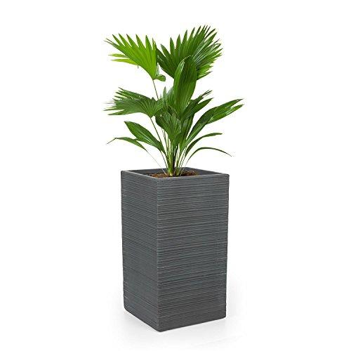 Blumfeldt luxflor • vaso piante • fioriera • posizionamento libero • nessun foro drenaggio acqua • fibra di vetro • interni/esterni • effetto cemento • 35x65x35cm (lxaxp) • grigio scuro