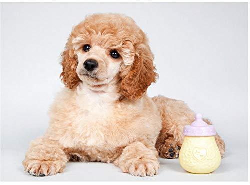 Csyhl Diamant Stickerei Tier pudel Bild DIY Diamant malerei kreuzstich Hund voll runde Diamant mosaik Dekoration -