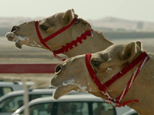 wild-arabia-episode-3