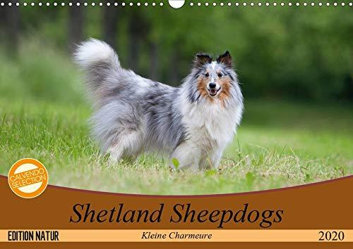 Kleine Charmeure (Wandkalender 2020 DIN A3 quer): Shelties mit besonderem Charme (Monatskalender, 14 Seiten ) (CALVENDO Tiere) ()