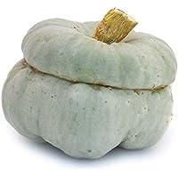 Blaue Bischofsmütze/Turbankürbis (Zucca Mantovana) - Dekokürbis Herbst Halloweendeko - frischer Gartenkürbis