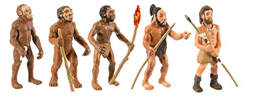 Safari Evolution de l'homme