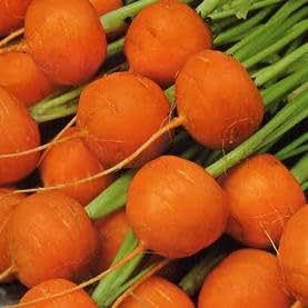 Carrot Paris Market 5 - Atlas