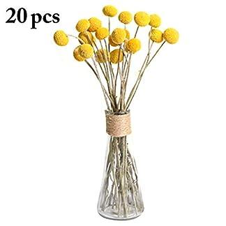 JUSTDOLIFE-Trockenblume-natrliche-Craspedia-Fotografie-Prop-konservierte-Blume-fr-Inneneinrichtungen