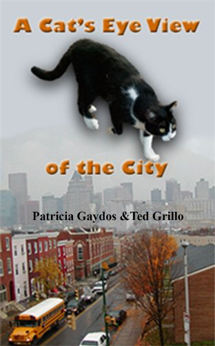 A Cat's Eye View of the City (English Edition)