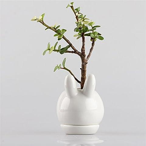Kawaii Rabbit Bunny White Ceramic Succulent Plant Flower Pot Flowerpot Planter Nursery Pots Mini Simple with Tray 10cm x 7.5cm x 11cm by