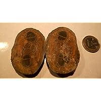 Septarien Paar, 58,55 g schwer, mit wunderschöner Zeichnung, Farben und Strukturen. Made by Nature. preisvergleich bei billige-tabletten.eu