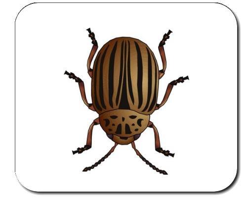 mauspad-mit-der-grafik-insekt-arthropoden-wirbellosen-koloradoskalbagge-kartoffelkafer-tier-kafer-sc
