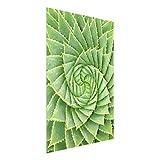 Bilderwelten Glasbild Wandbild mit Halterung Glas Kunstdruck Spiral Aloe HxB: 100cm x 75cm
