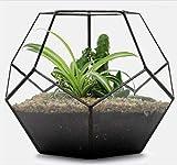 Asvert Grand Vase Transparent en Verre Pot de Fleurs Géométrique Style Industriel Plante Terrarium Micro Paysage Decoratif pour Jardin Bureau PatioBalcon 17.5 * 17.5 * 15cm