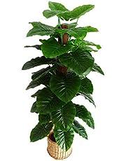 Florakite Plastic Artificial Plant Mostiq Tree with Bendabl