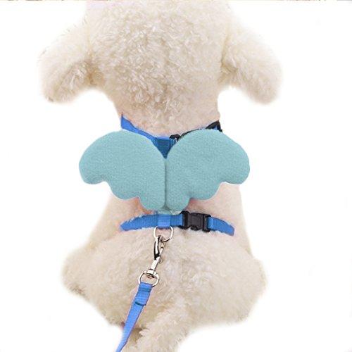 Omkuwl Haustier Hund Nylon Leinen Halsbänder Pet Traktion Gürtel Spaziergang Hund Katze Walking Angel Wing Pet Zubehör blau S