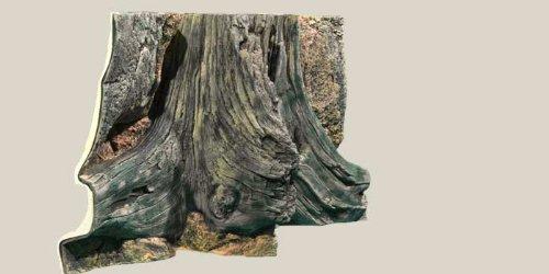 aquarienruckwand-amazonas-80x40cm
