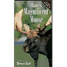 Maine's Magnificent Moose