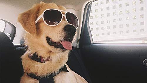 WEIMEING Cooler Hund Mit Sonnenbrille Tapete Malerei by Zahlen DIY Moderne Acrylfarbe Auf Leinwand Handgemalte Hauptdekoration Geschenk Rahmenlose 40X50 cm