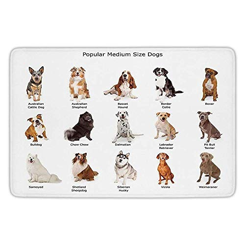 tchen Floor Mat Carpet,Dog Lover Decor,A Group of Different Puppy Breeds Family Type Species Dalmatian Husky Bulldog Image Print,Multi,Flannel Microfiber Non-slip Soft Absorbent ()