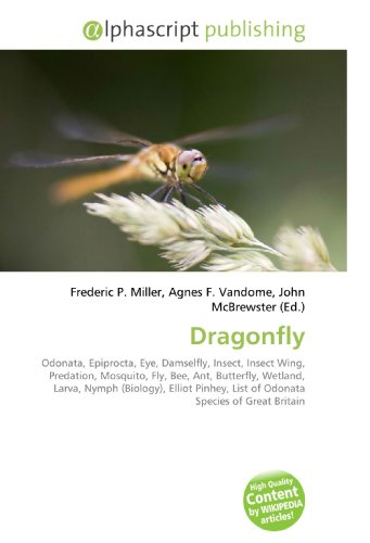dragonfly-odonata-epiprocta-eye-damselfly-insect-insect-wing-predation-mosquito-fly-bee-ant-butterfl