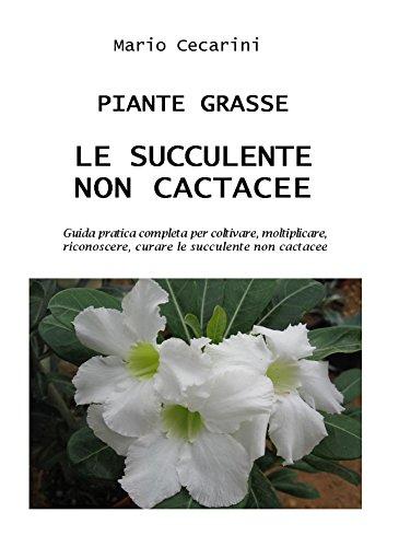 piante-grasse-le-succulente-non-cactacee-