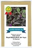 Royal Black, scharfes, schwarzes Chili - 10 Samen