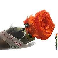 Rose Te Amo konservierte di rose è
