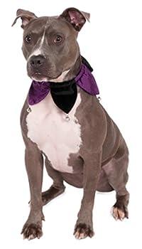 RUBIS Costume en velours Jester Collier pour animal domestique Costume, S/M