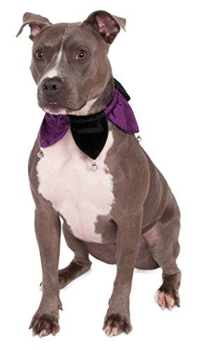 Rubies Costume Samt Jester Hundehalsband Pet Kostüm, (Oz Zauberer Von Der Hund)