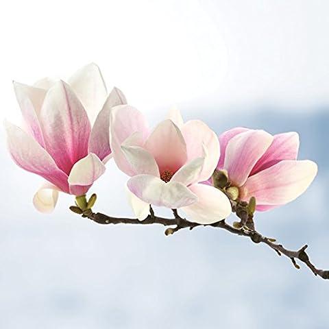 20serviettes Napkins 33x 33cm Table packg. serviettage Magnolia Fleurs branche Magnolia Twig Ligth Blue