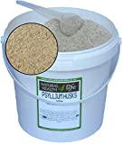 Psyllium Husks 500 g in contenitore con cucchiaio da portata
