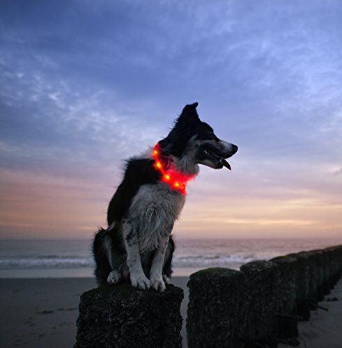 LED-Dog-Necklace-Collar-USB-Rechargeable-Loop-Available-in-6-Colors-Makes-Your-Dog-Visible-Safe-Seen-Red
