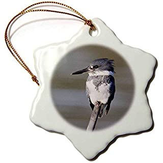 Enid18Bru Keepsake Belted Kingfisher.(Ceryle alcyon).Back Bay Reserve,California Snowflake Ornament, Porcelain, 3 inch