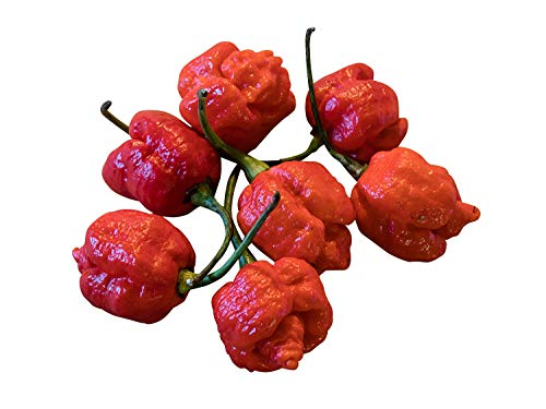 Shop Meeko Hot Chili -Moruga Scorpion Hybrid- 1000 Seeds * Bulk- Scorpion Hybrid
